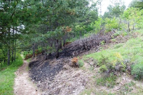 пожар в ивайловград, борчешма, дупката, пожар