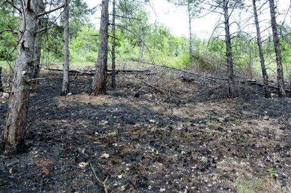 пожар в ивайловград, борчешма, пожар